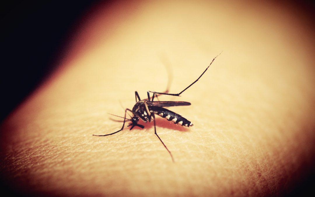 La reducción de la malaria  se estanca, con 10 países africanos como máximos afectados